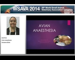 Avian Anaesthesia