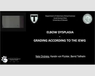 Elbow Dysplasia - Grading According to the IEWG
