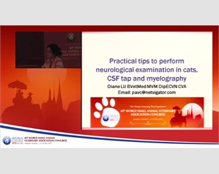 Practical Tips to Perform Neurological Exams in Cats-CSF Tap & Myelography