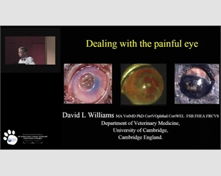 The Causes & Cures of Ocular Pain